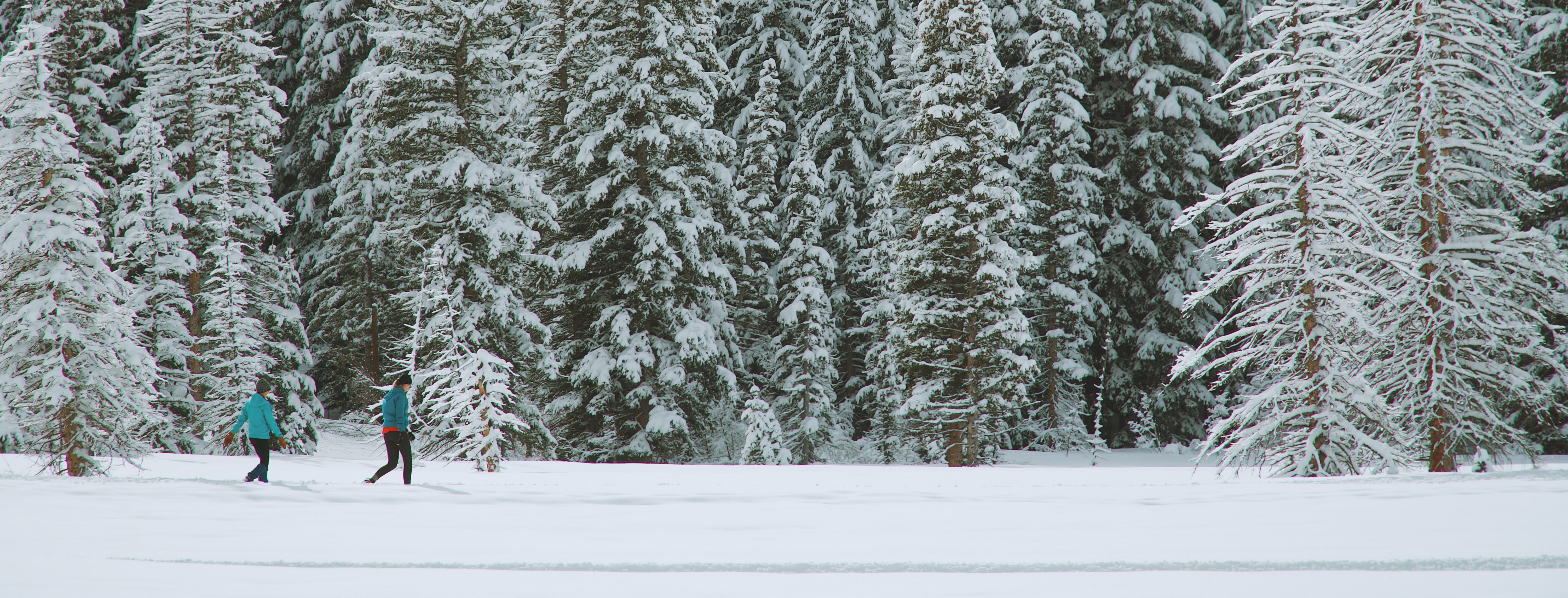 Two people in brightly coloured jackets walk through a snowy forest. Photo credit: Greg Rakozy